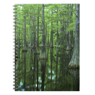 USA, Florida, Apalachicola National Forest, Bald Notebook