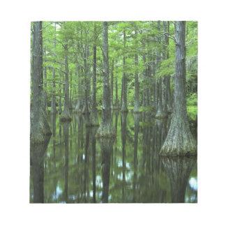 USA, Florida, Apalachicola National Forest, Bald Notepad