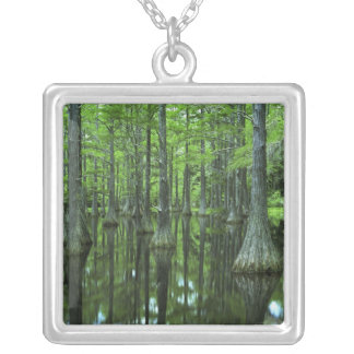 USA, Florida, Apalachicola National Forest, Bald Silver Plated Necklace
