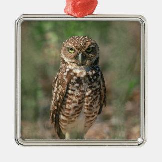 USA, Florida, Burrowing Owl. 2 Christmas Ornament