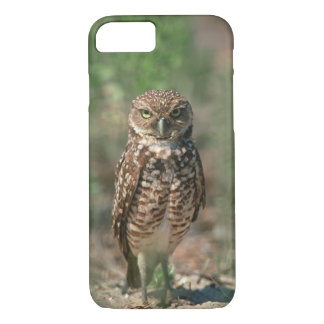 USA, Florida, Burrowing Owl. 2 iPhone 8/7 Case