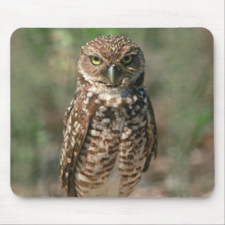 USA, Florida, Burrowing Owl. 2 Mouse Mat