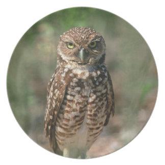 USA, Florida, Burrowing Owl. 2 Plate
