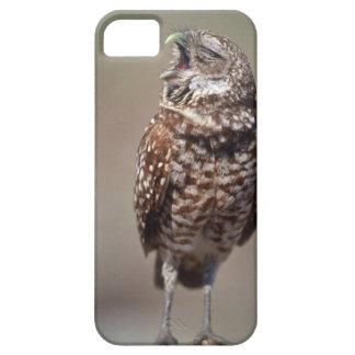 USA, Florida, Burrowing Owl. iPhone 5 Covers