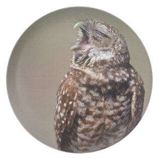 USA, Florida, Burrowing Owl. Plate