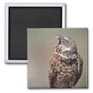 USA, Florida, Burrowing Owl. Square Magnet