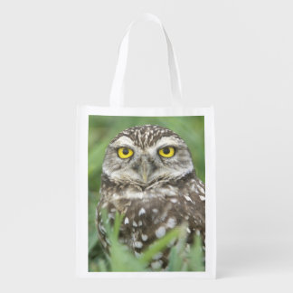 USA, Florida, Cape Coral, Burrowing Owl (Athene