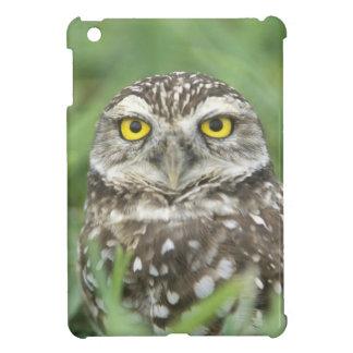 USA, Florida, Cape Coral, Burrowing Owl (Athene Case For The iPad Mini