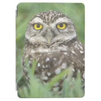 USA, Florida, Cape Coral, Burrowing Owl (Athene iPad Air Cover
