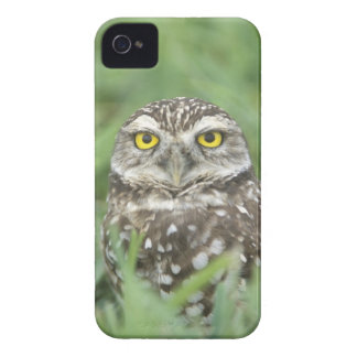 USA, Florida, Cape Coral, Burrowing Owl (Athene iPhone 4 Cover