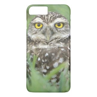 USA, Florida, Cape Coral, Burrowing Owl (Athene iPhone 8 Plus/7 Plus Case