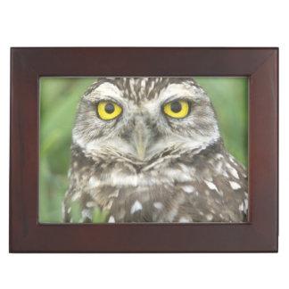 USA, Florida, Cape Coral, Burrowing Owl (Athene Keepsake Box