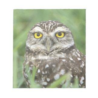 USA, Florida, Cape Coral, Burrowing Owl (Athene Notepad