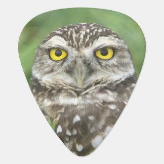 USA, Florida, Cape Coral, Burrowing Owl (Athene Plectrum
