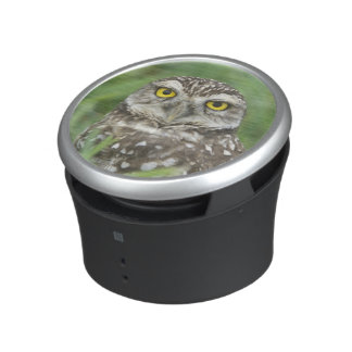 USA, Florida, Cape Coral, Burrowing Owl (Athene Speaker