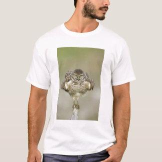 USA, Florida, Cape Coral, Close-up of burrowing T-Shirt