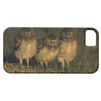 USA, Florida, Cape Coral. Three Burrowing Owls iPhone 5 Case