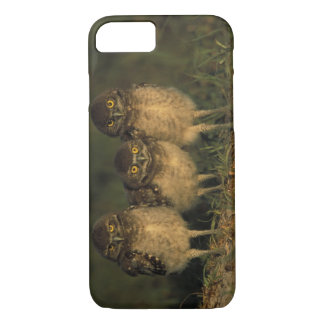 USA, Florida, Cape Coral. Three Burrowing Owls iPhone 8/7 Case