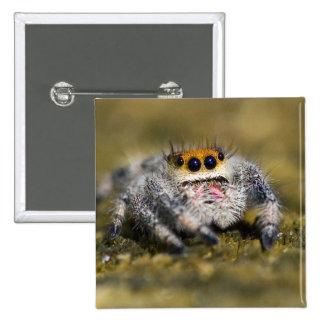 USA, Florida. Close-up of jumping spider. Credit 15 Cm Square Badge