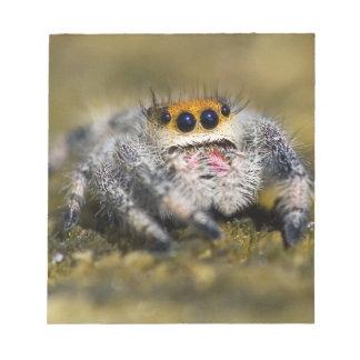 USA, Florida. Close-up of jumping spider. Credit Notepad