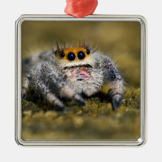 USA, Florida. Close-up of jumping spider. Credit Silver-Colored Square Decoration