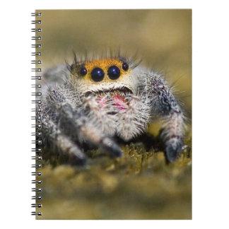 USA, Florida. Close-up of jumping spider. Credit Spiral Notebook