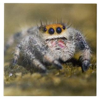 USA, Florida. Close-up of jumping spider. Credit Tile