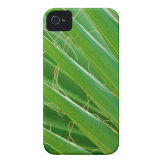 USA, Florida. Close Up Of Palm Fronds Case-Mate iPhone 4 Cases