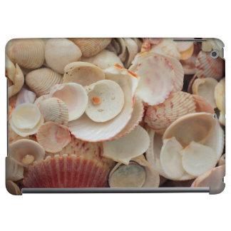 USA, Florida. Close Up Of Shells On Santa Rosa