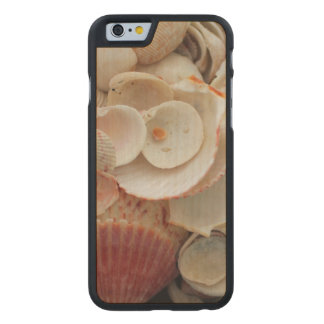 USA, Florida. Close Up Of Shells On Santa Rosa Carved Maple iPhone 6 Case