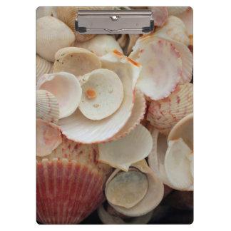 USA, Florida. Close Up Of Shells On Santa Rosa Clipboard