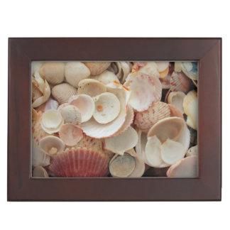 USA, Florida. Close Up Of Shells On Santa Rosa Keepsake Box