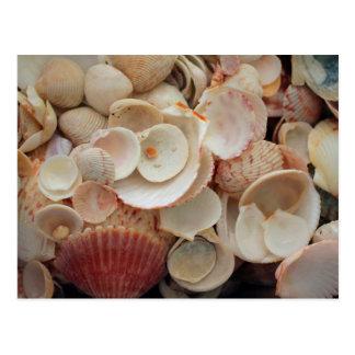 USA, Florida. Close Up Of Shells On Santa Rosa Postcard