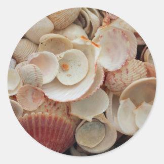 USA, Florida. Close Up Of Shells On Santa Rosa Round Sticker