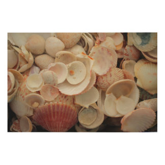 USA, Florida. Close Up Of Shells On Santa Rosa Wood Wall Decor