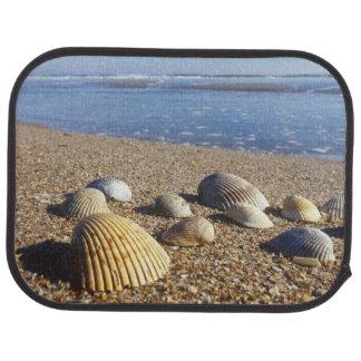 USA, Florida, Coastal Sea Shells Car Mat