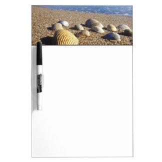 USA, Florida, Coastal Sea Shells Dry Erase Board