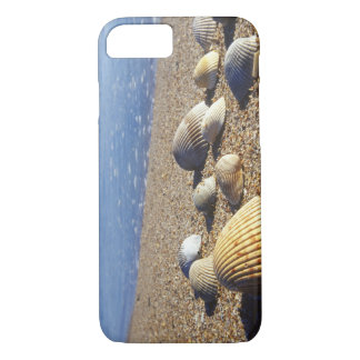 USA, Florida, Coastal Sea Shells iPhone 8/7 Case