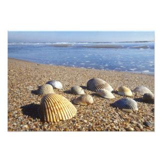 USA, Florida, Coastal Sea Shells Photo Art