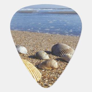 USA, Florida, Coastal Sea Shells Plectrum