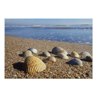USA, Florida, Coastal Sea Shells Poster