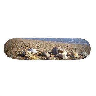 USA, Florida, Coastal Sea Shells Custom Skateboard