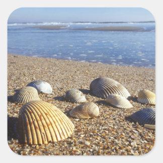 USA, Florida, Coastal Sea Shells Square Sticker