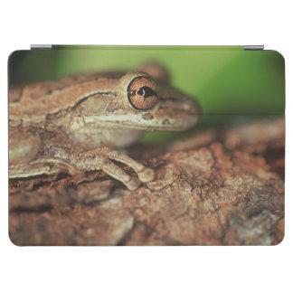 USA, Florida, Cuban Tree Frog. iPad Air Cover
