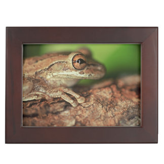 USA, Florida, Cuban Tree Frog. Keepsake Box