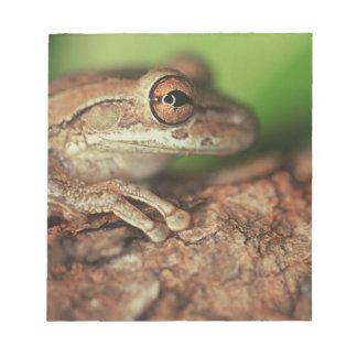 USA, Florida, Cuban Tree Frog. Notepad