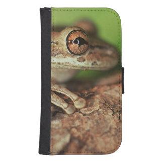 USA, Florida, Cuban Tree Frog. Samsung S4 Wallet Case