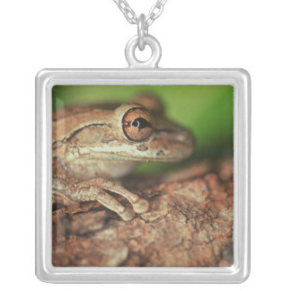 USA, Florida, Cuban Tree Frog. Silver Plated Necklace