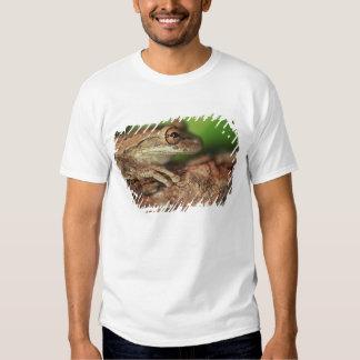 USA, Florida, Cuban Tree Frog. T-shirts