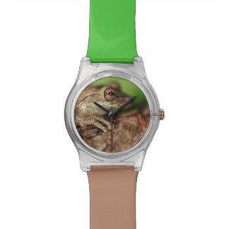 USA, Florida, Cuban Tree Frog. Wrist Watches